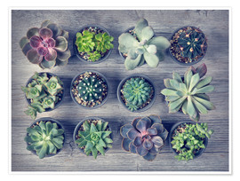 Póster Different succulents above the black wooden background
