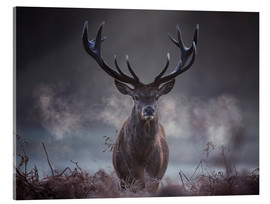 Metacrilato  A majestic red deer stag breathes out in the winter air - Alex Saberi