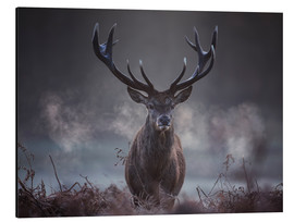 Aluminio-Dibond  A majestic red deer stag breathes out in the winter air - Alex Saberi