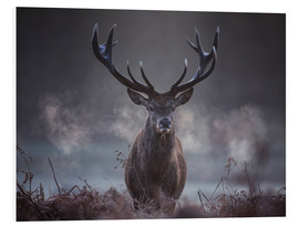 Forex  A majestic red deer stag breathes out in the winter air - Alex Saberi