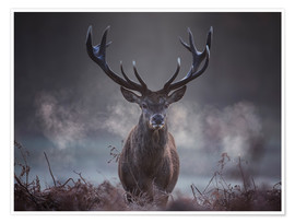 Alex Saberi - A majestic red deer stag breathes out in the winter air
