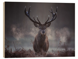 Madera  A majestic red deer stag breathes out in the winter air - Alex Saberi