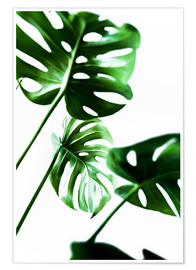 Póster  Monstera 4 - Mareike Böhmer Photography