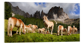 Cuadro de metacrilato  Haflinger horses in a meadow in front of the Rosengarten Mountains - Michael Rucker