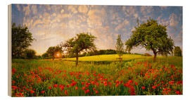 Madera  Poppies field with fruit trees at sunset - Michael Rucker