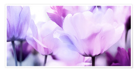 Póster pastel pink purple tulips