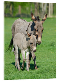 Donkey mum and her little baby