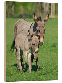 Cuadro de madera  Donkey mum and her little baby
