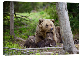 Lienzo  Brown bear with cubs in forest