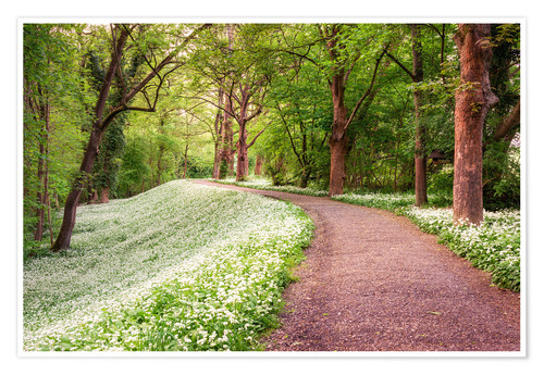 Póster Forest path in spring