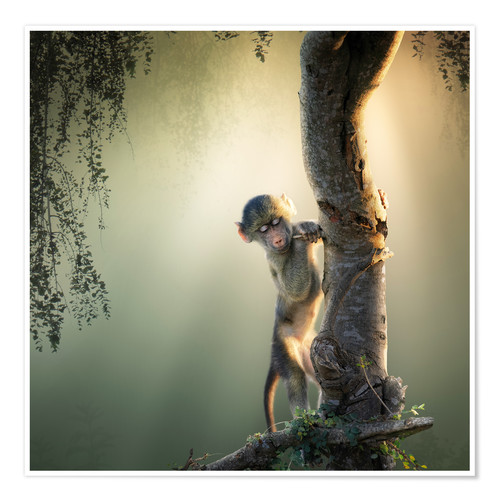 Póster Baby baboon in tree