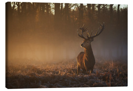 Lienzo  Stag in autumn sunrise - Alex Saberi