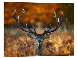 Forex  The stag king of fire - Alex Saberi