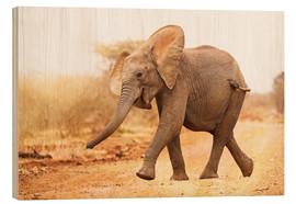 Madera  Happy elephant, South Africa - wiw