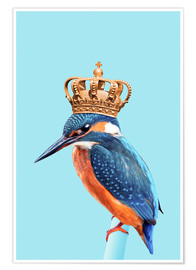 Póster  KINGFISHER - Jonas Loose