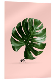Cuadro de metacrilato  MONSTERA ANT - Jonas Loose