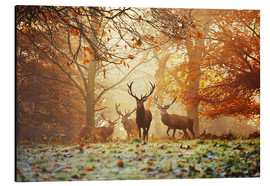 Aluminio-Dibond  Stags and deer in an autumn forest with mist - Alex Saberi