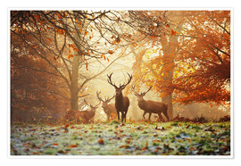Póster  Stags and deer in an autumn forest with mist - Alex Saberi