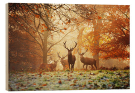 Madera  Stags and deer in an autumn forest with mist - Alex Saberi