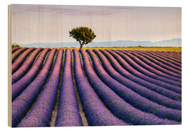 Cuadro de madera  Lavender field and tree at sunset, Provence - Matteo Colombo