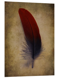 Forex  Blue and red feather - Jaroslaw Blaminsky
