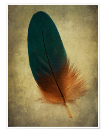 Póster Green and orange feather