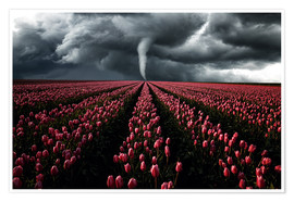 Póster Tornado and tulip field