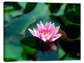 Lienzo  Summer water lily IV - blackpool