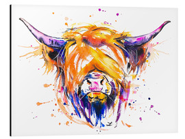 Aluminio-Dibond  Scottish Highland Cow - Zaira Dzhaubaeva