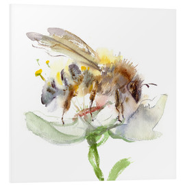 Forex  Honey bee - Verbrugge Watercolor