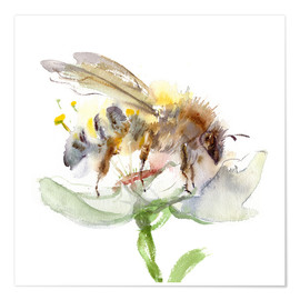 Póster  Honey bee - Verbrugge Watercolor