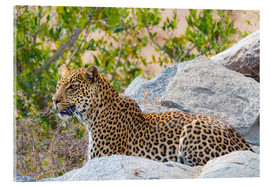 Metacrilato  Leopard between rocks close up Kruger National Park, South Africa - Fabio Lamanna