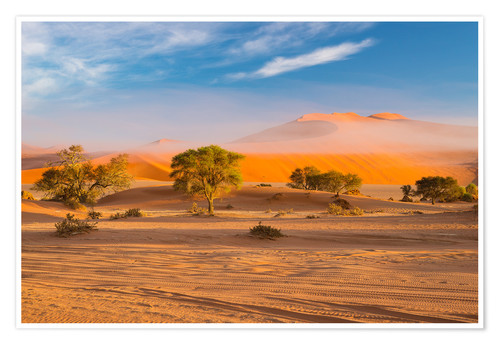 Póster Morning mist over sand dunes and Acacia trees at Sossusvlei, Namibia