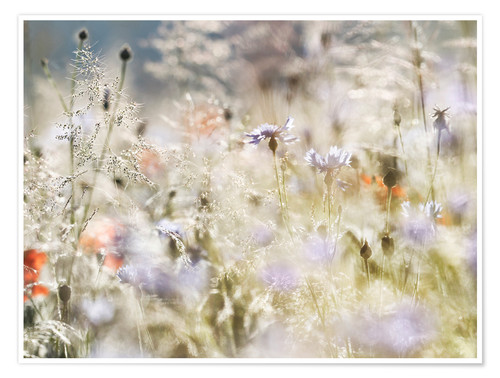 Póster Summer meadow in the morning