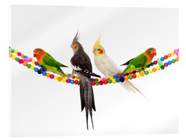 Cuadro de metacrilato  Lovebirds and cockatiels