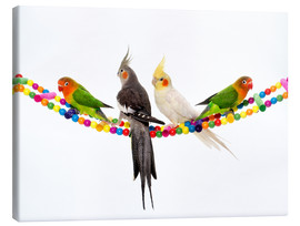 Lienzo  Lovebirds and cockatiels