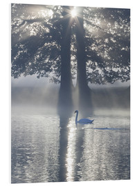 Cuadro de PVC  Swan on misty lake - Alex Saberi