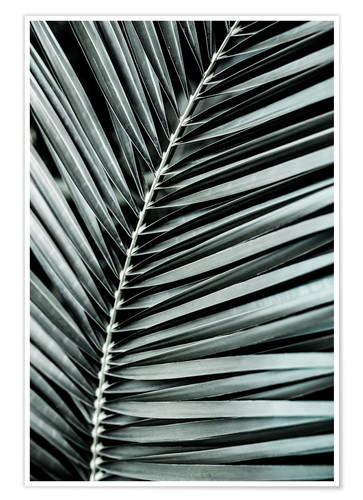 Póster French Palms 3