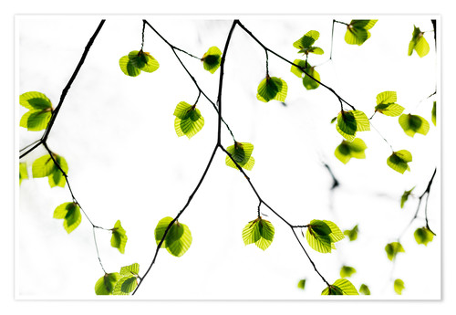 Póster Green Leaves 3