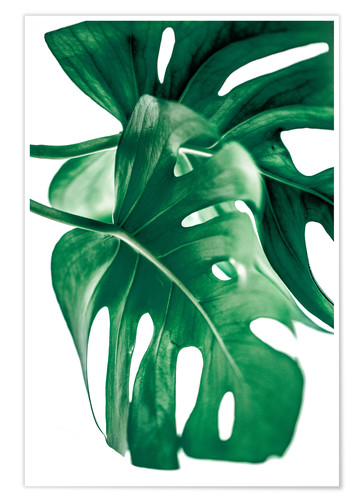 Póster Monstera 6