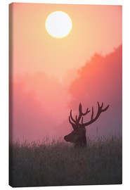 Lienzo  A male deer Stag at sunset - Alex Saberi