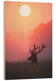 Madera  A male deer Stag at sunset - Alex Saberi