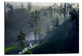 Cuadro de aluminio  Enchanting tea plantation forest, Sri Lanka - Paul Kennedy