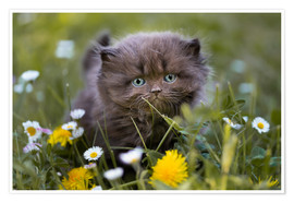Póster kitten on a meadow in summer