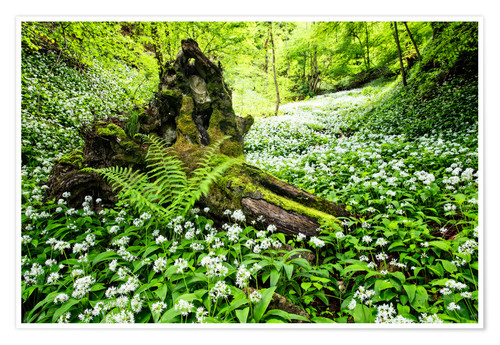 Póster Fairy Forest with wild garlic