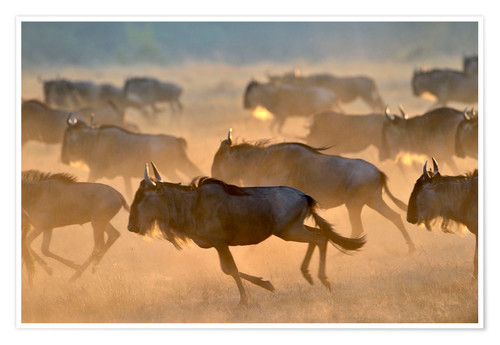 Póster Wildebeests during the great migration, Serengeti