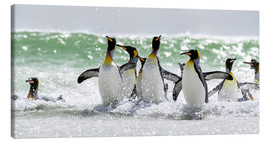 Lienzo  King Penguin (Aptenodytes patagonicus) on the Falkand Islands in the South Atlantic. Group of pengui - Cubo Images