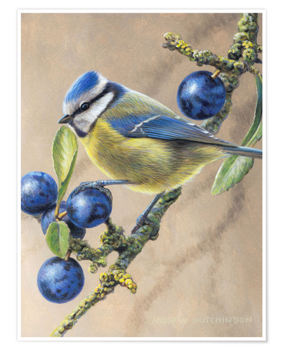 Póster Blue yellow bird perching on tree branch with fruits