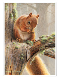 Póster  Red squirrel sitting on tree in forest