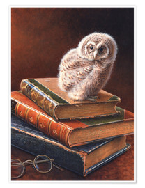 Póster Tawny owl perching on stack of books